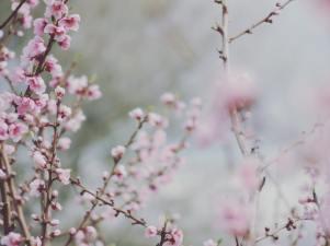 Arrelar, com un arbre, dins la terra | Marià Villangómez ? #riberadebreturisme @riberadebreturisme #igersebre @igersebre #somebre @somebre #terresdelebre @terresebre @postalsdelsud #postalsdelsud @sommillennials #minaturalezalumix @vinebreactiu #catalunyanatura @catalunyanatura